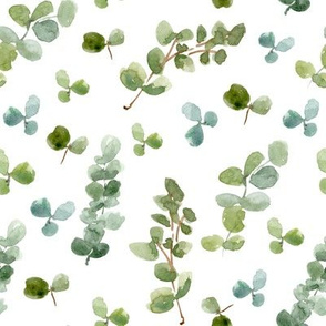 Eucalyptus and Clovers