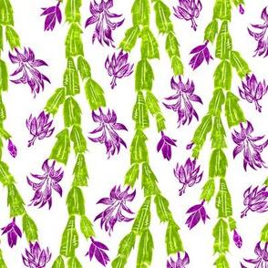 fresh blooming Christmas cactus