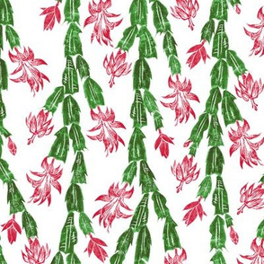 Christmas cactus in red and green
