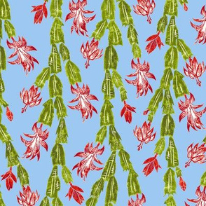 Christmas cactus on sky blue