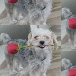 Rosy puppy
