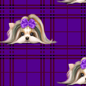 Parti-Biewer-Yorkie Plaid purple XL