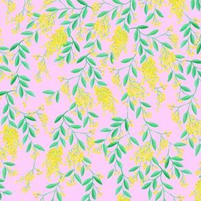 Golden Wattle | Australian Flowers | Acacia | Pink