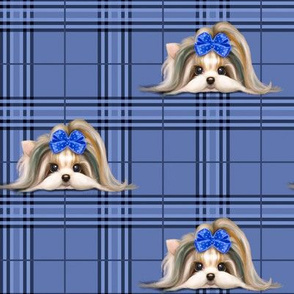 Parti-Biewer-Yorkie Plaid blue tone M