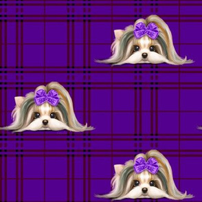 Parti-Biewer-Yorkie Plaid purpleM