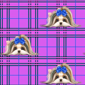 Parti-Biewer-Yorkie Plaid purple blue M