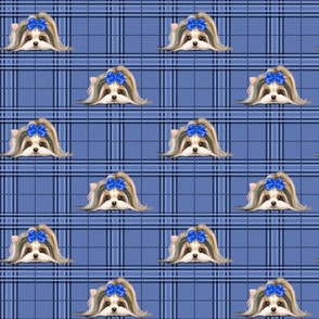 Parti-Biewer-Yorkie Plaid blue tone S