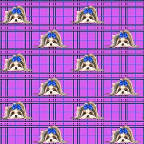 Parti-Biewer-Yorkie Plaid purple blue S