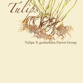 Tulip Tea Towels