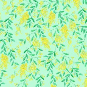 Golden Wattle | Australian Flowers | Acacia | Mint