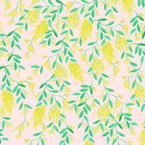 Golden Wattle | Australian Flowers | Acacia | Peach