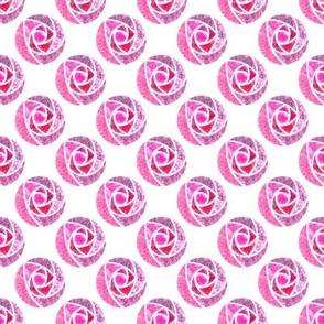 Pink roses macintosh