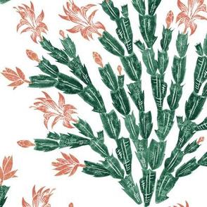 succulent peach Christmas cactus damask