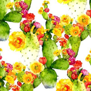 cacti watercolor blooms  on white