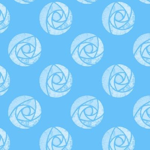 White mackintosh roses on a blue background