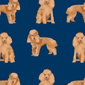 toy poodle apricot simple dog breed fabric navy