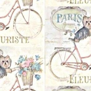 Cycle Yorkie