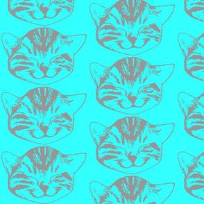 kitty gray aqua