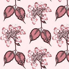 pink hydrangea lace