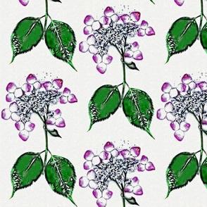 Purple Lace Hydrangea