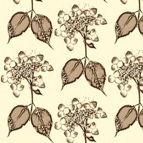 Yellow Brown Lace Hydrangea