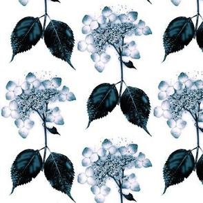 blue on white lace hydrangea