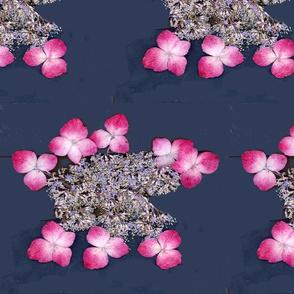 pink on navy- lace hydrangeas