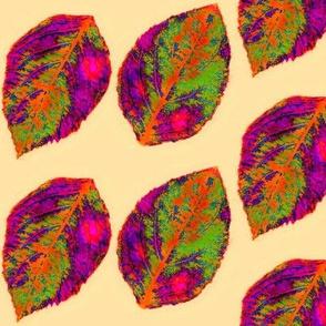 multicolored lace hydrangea leaves phottonegoldpeachlightbackstif