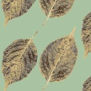 green lace hydrangea leaves