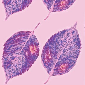 purple pink hydrangea leaves