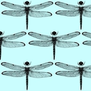 Dragonflies on Light Blue // Large
