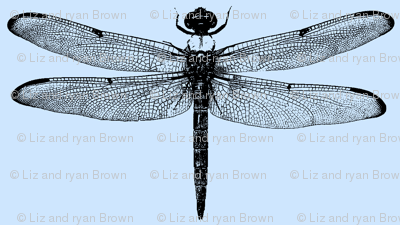 Dragonflies on Blue // Large