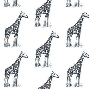 Giraffes in watercolor