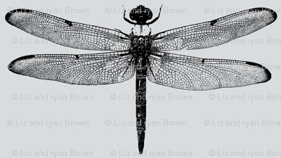 Dragonflies on Light Grey // Large