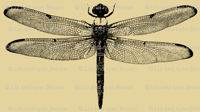 Dragonflies on Tan // Small