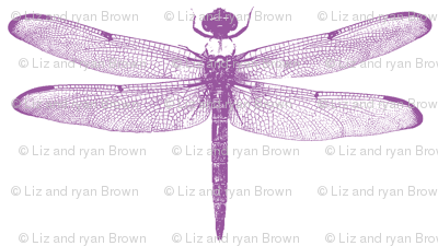 Purple Dragonflies // Small