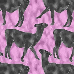 Moody Mod Llamas - graphite bubblegum