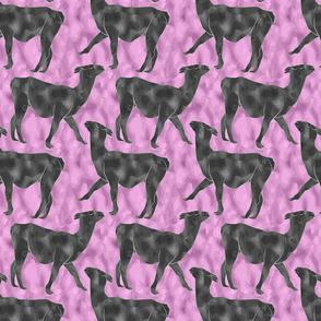 Moody Mod Llamas - graphite bubblegum small