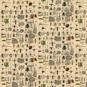 Vintage Bee and Insect Grid Print