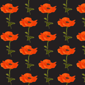 poppy-black