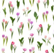 Rpink_tulips_repeating_pattern_150_dpi_shop_thumb