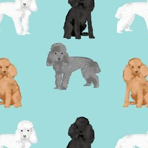 toy poodle mixed simple dog breed fabric light blue