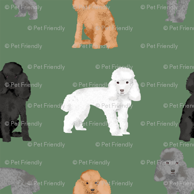 toy poodle mixed simple dog breed fabric green