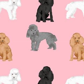 toy poodle mixed simple dog breed fabric pink