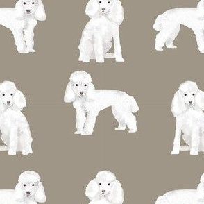 toy poodle white simple dog breed fabric medium tan