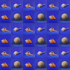 shell-collection