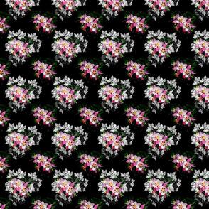 Aquilegia_vodosbor_ eagles_pink flower_white flower