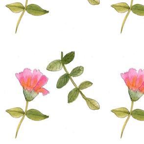 delicatedrawings (2)