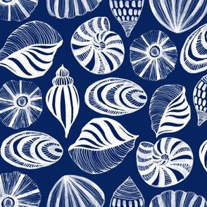sea shells-150