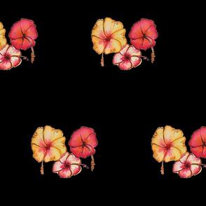 Splashy hibiscus